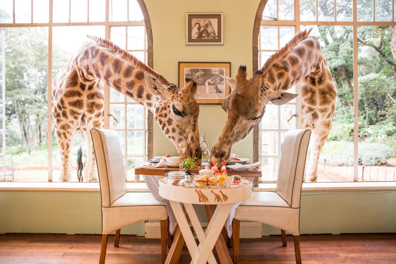 lista de deseos invitada perfecta blog hotel jirafa desayuno