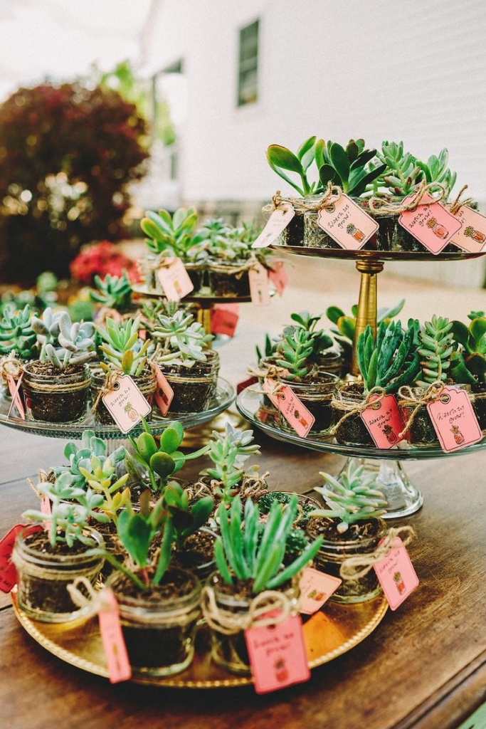 Plantas de regalo para invitados