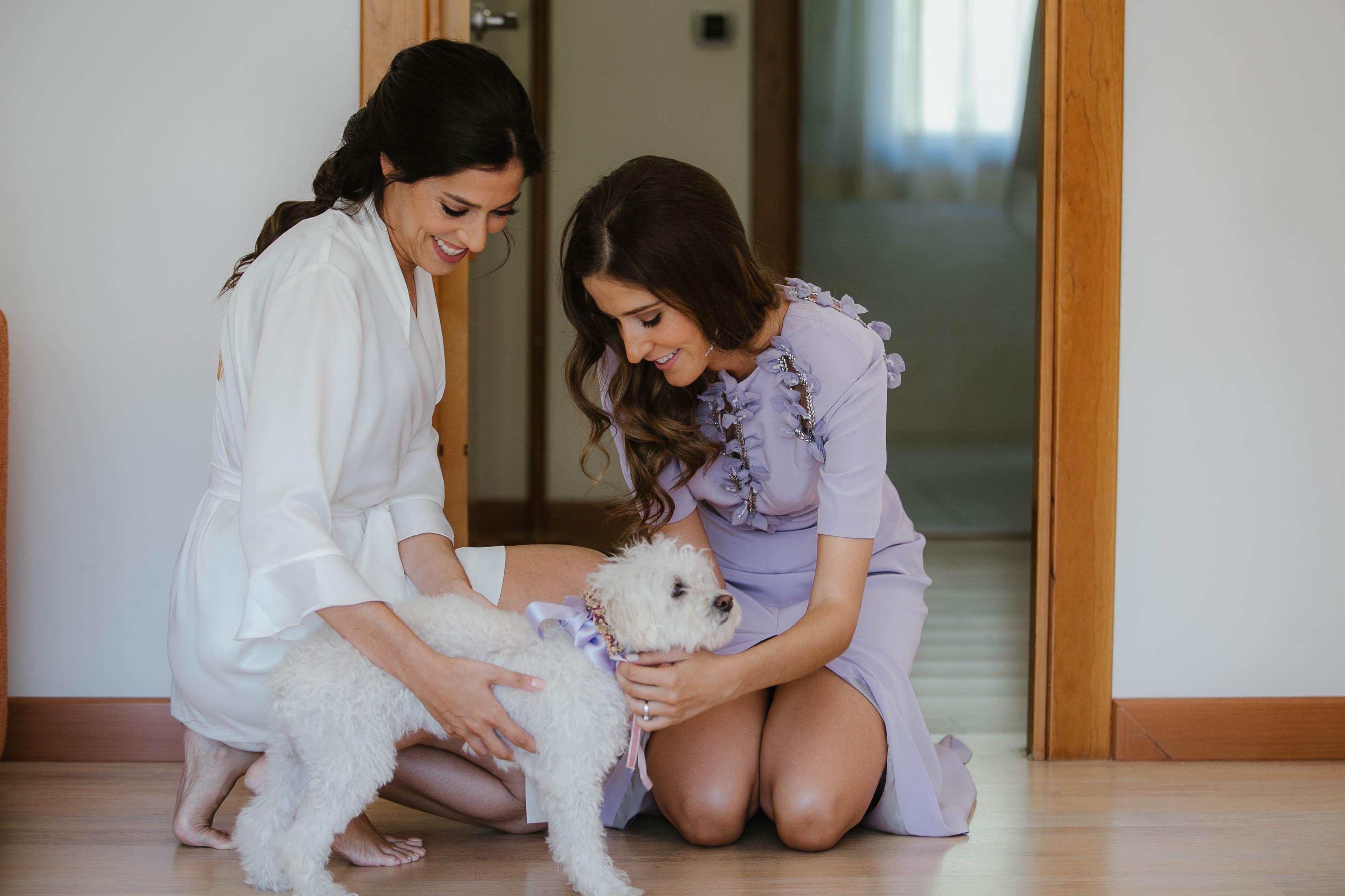 tocado perro boda
