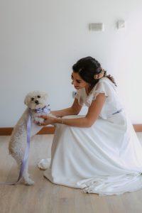 perro novia boda