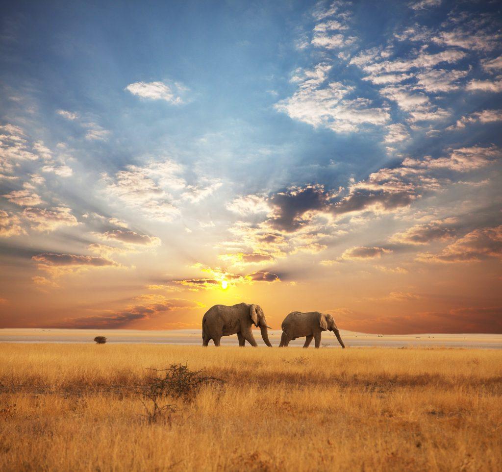 Viaje recomendado luna de mie africa