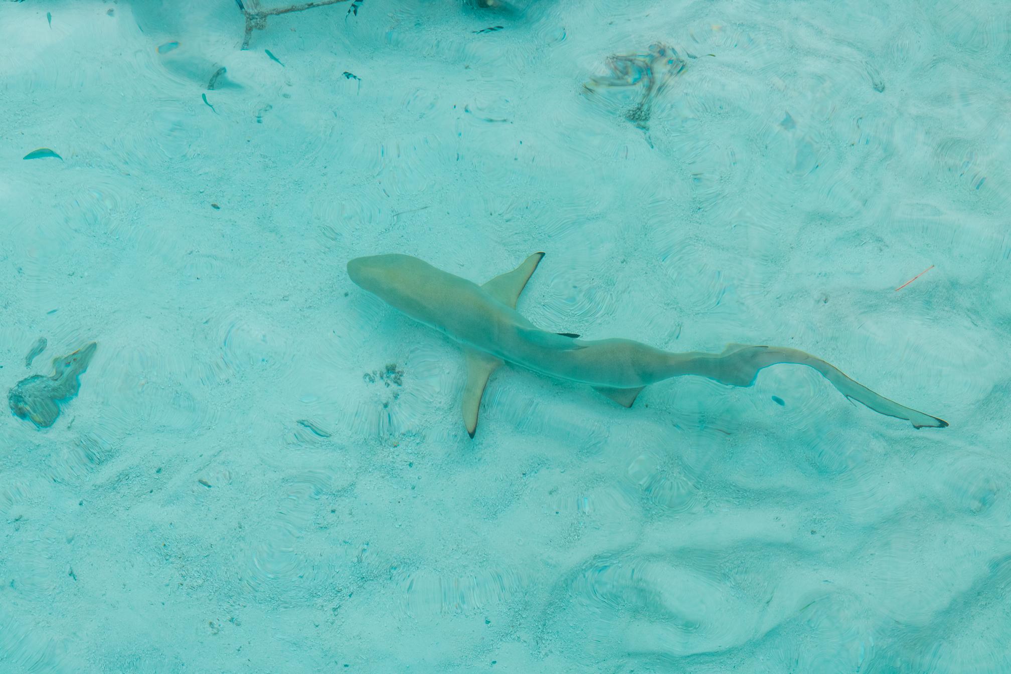 snorkel maldivas