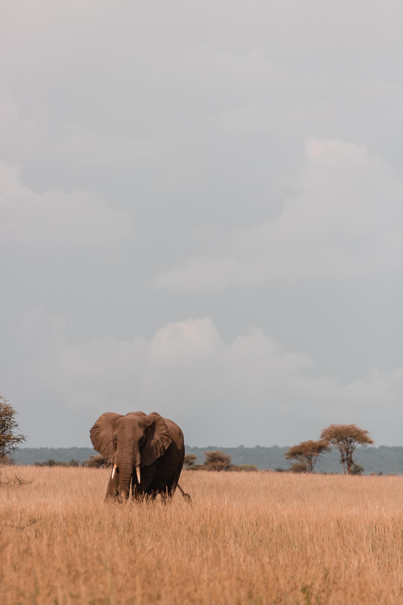 safari africa invitada perfecta