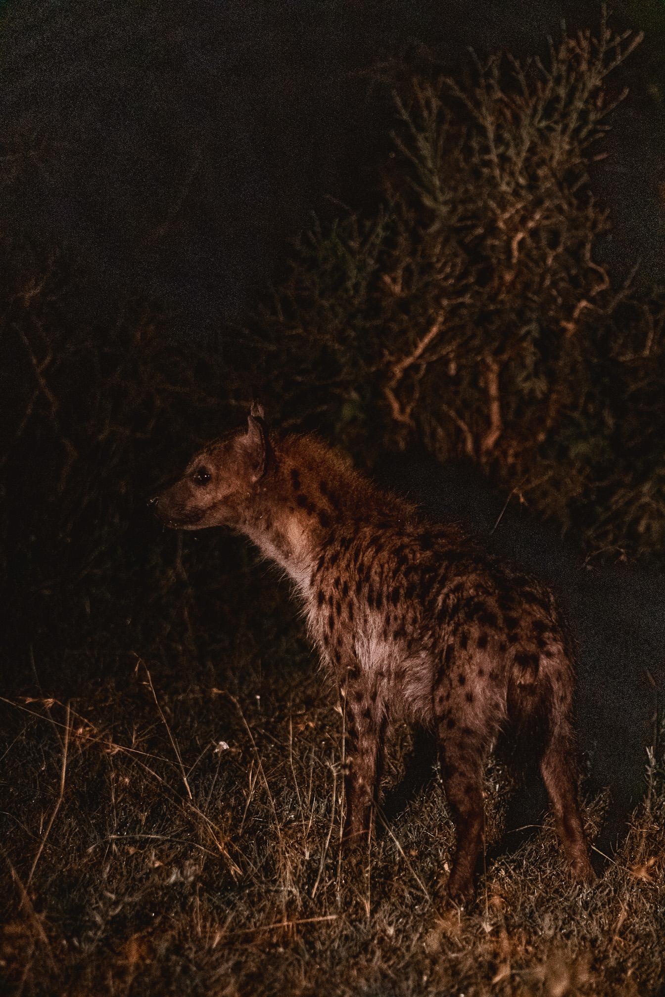 safari nocturno tanzania